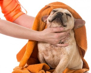 Picture of a dog being towel dried
